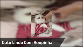 Gato Lindo Com Roupa Vermelha De Listra Branca, Que Fofura Ele Ficou!