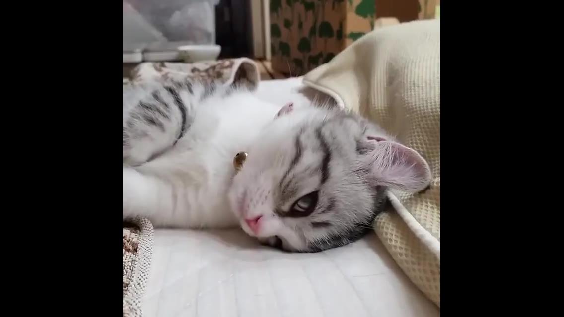 Gato lindo espreguiçando