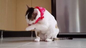 Gato Lindo Na Hora Do Banho, Ele É A Fofura Do Dia Que Vai Conquistar Você!