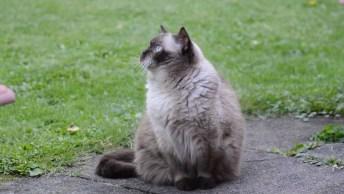 Gato Mais Lindo Para Compartilhar No Facebook, Que Perfeição!