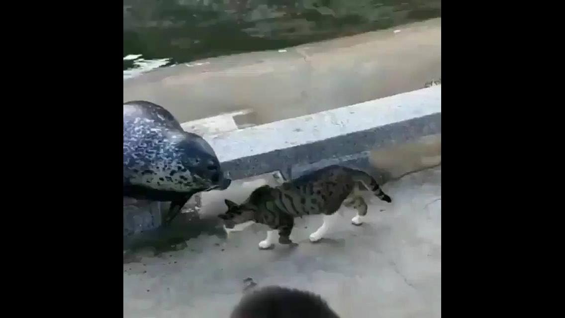 Gato nocauteando uma foca