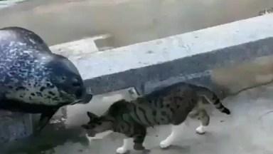 Gato Nocauteando Uma Foca, Quem Mandou Ficar Dando Bobeira Ali Na Beira Hahaha!