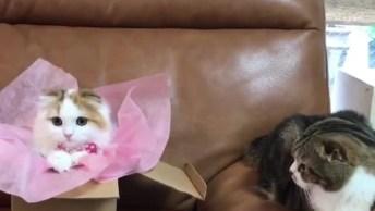 Gato Olhando Assustado Para Gatinha Que Acabou De Chegar!