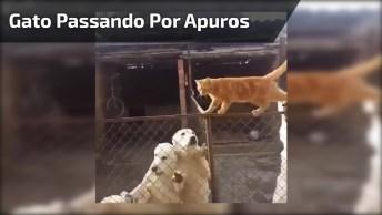 Gato Passando Por Apuros, Quanto Cachorro Querendo Pegá-Lo!