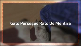 Gato Persegue Rato De Mentira, Mas Logo Percebe A Farsa, Confira!