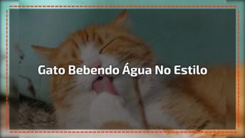 Gato Preguiçoso Bebendo Água, Olha Que Folgado Hahaha!