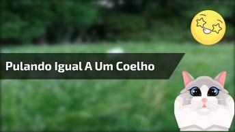 Gato Pulando Igual A Um Coelho No Mato, Veja A Cena No Vídeo!