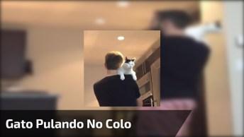 Gato Pulando No Colo Do Humano, Que Amor Mais Lindo, Confira!