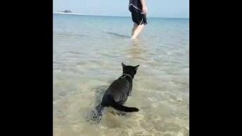 Gato Que Adora Nadar Na Praia, Já Tinha Visto Isso Antes?