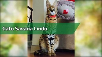 Gato Que Parece Um Leopardo, Parece Que Ele Esta Com Fome Hein?