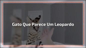 Gato Que Parece Um Leopardo, Que Coisa Mais Linda Gente, Confira!