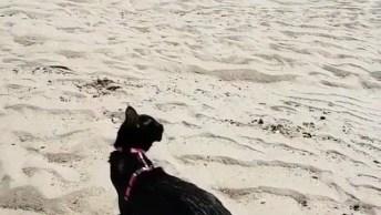 Gato Que Sabe Nadar E Não Tem Medo De Água, Olha Só Que Legal!