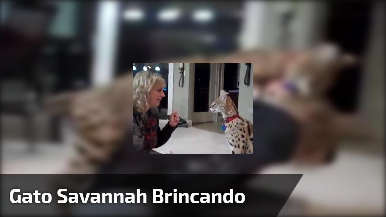 Gato Savannah brincando