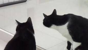 Gato Se Autoconhecendo No Espelho, Seu Reflexo O Fez Apaixonar!