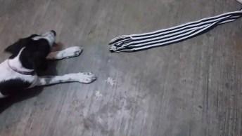 Gato Se Enrosca Em Cachecol E Cachorro Aproveita Da Situação Hahaha!