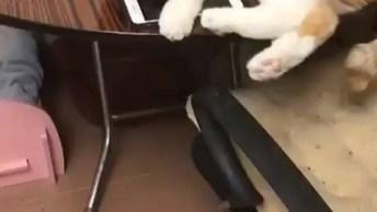 Gato Segurando Celular, Até Ele Esta Viciado Nessa Tecnologia!