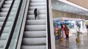 Gato Sendo Enganado Por Escada Rolante, Coitado Bem Que Tentou Hahaha!