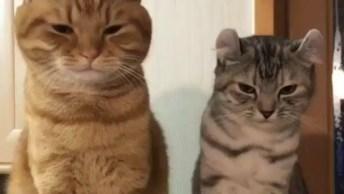 Gato Sendo Gato, Veja O Que Este Gatinho Faz Com A Mão De Sua Mamãe!