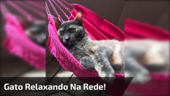 Gato Tem Uma Rede Só Para Ele Para Tirar Aquela Soneca, Confira!