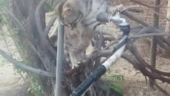 Gato Tentando Arrumar Vazamento De Água, Esse É A Favor Da Natureza!