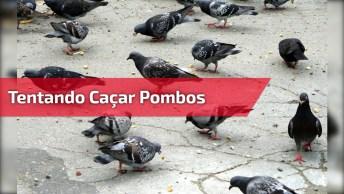 Gato Tentando Caçar Pombos, Mas Parece Que Algo Deu Errado Hahaha!