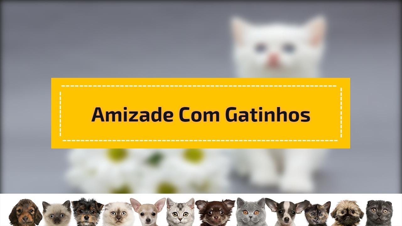 Amizade com gatinhos