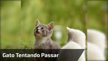 Gato Tentando Passar Na Boa, Já Que Não Sai, Vai Na Grosseria Mesmo!