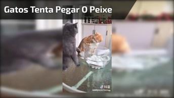 Gato Tentando Pegar O Peixe E O Outro Gato Defendendo O Peixinho!