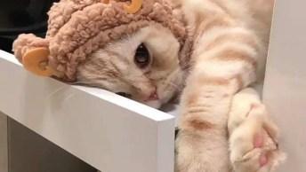 Gato Tirando Um Cochilo Com Toquinha De Ursinho, Que Fofura Gente!