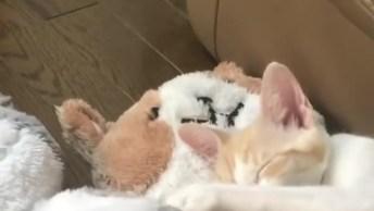 Gato Tirando Uma Soneca Em Cima De Seus Ursinhos De Pelúcia!