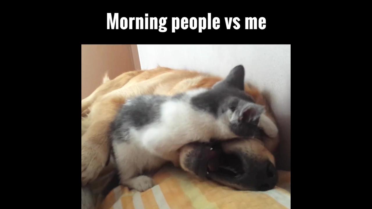 Gato tormentando cachorro que esta querendo dormir