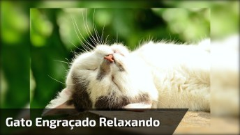 Gato Tranquilo Nem Dá Bola Para Cachorro Que Late Nele Hahaha!