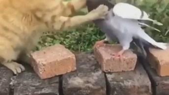 Gato X Pomba - Quando Você Quer Forçar Uma Amizade Hahaha!