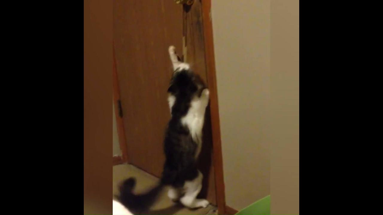 Gatos caindo tombos hilários