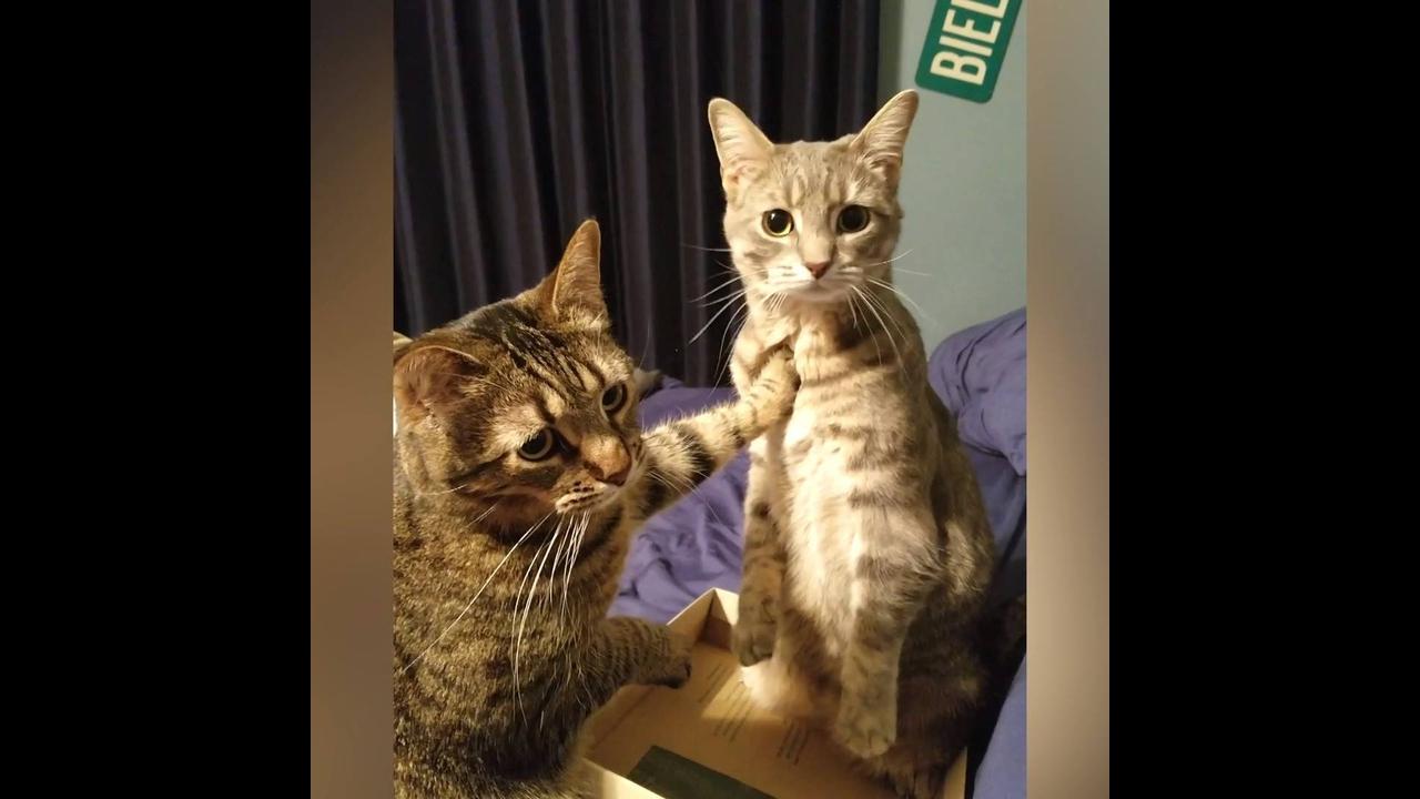 Gatos com as reações mais engraçadinhas