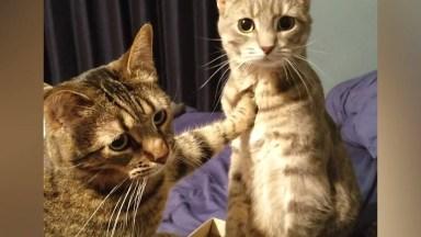 Gatos Com As Reações Mais Engraçadinhas, Este Animal É Hilario!