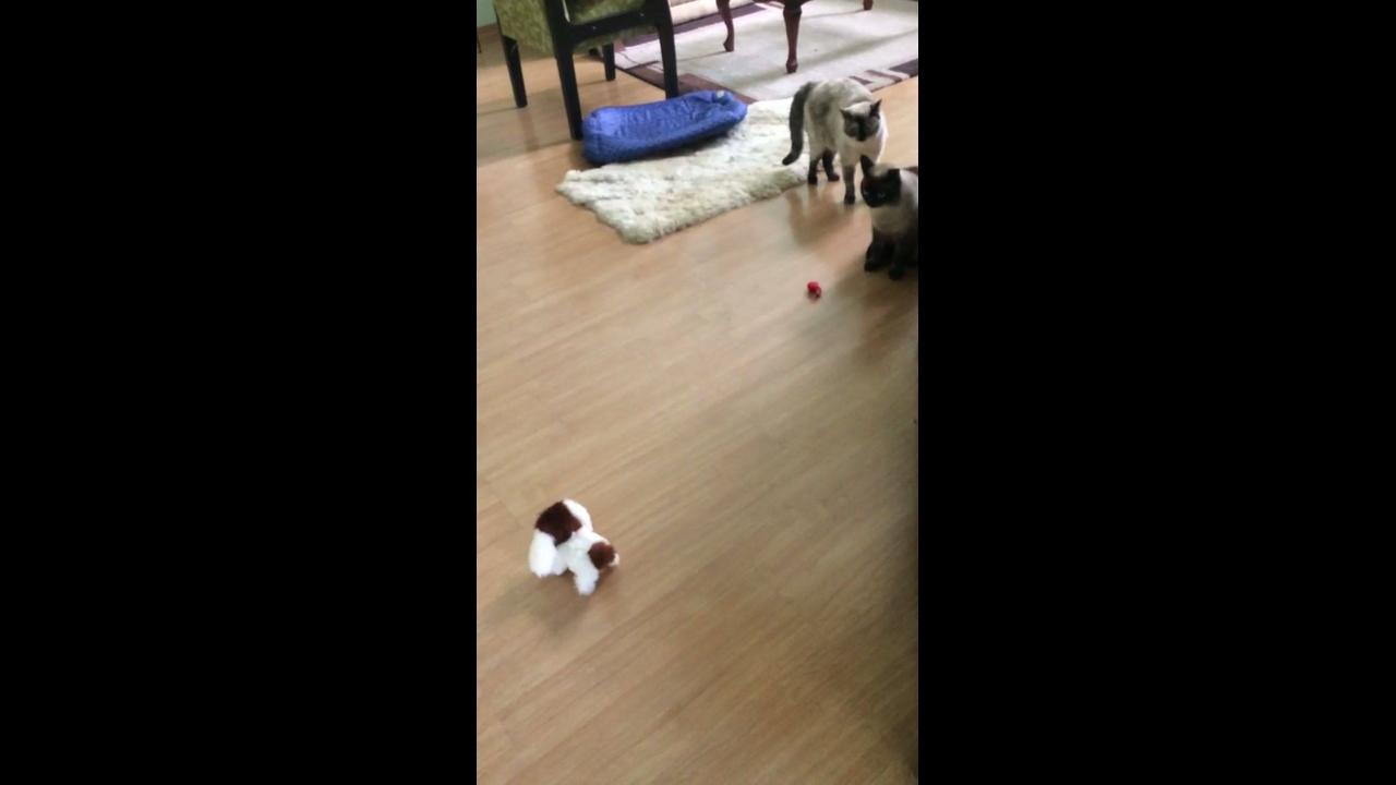 Gatos com medo de cachorrinho de brinquedo