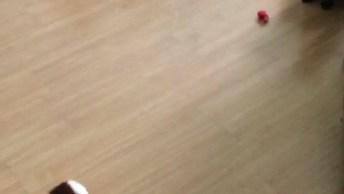 Gatos Com Medo De Cachorrinho De Brinquedo, Muito Engraçado!