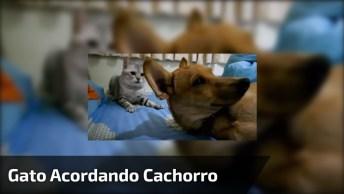 Gatos Como Eles Amam Os Cães, Hahaha! Olha Só O Que Este Amiguinho Fez!