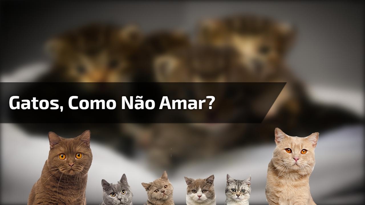 Gatos, como não amar?