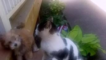 Gatos, Como Não Amar Essas Criaturas Cheia De Reações Engraçadas!