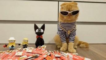 Gatos, Como Não Amar Estes Seres? Impossível Suas Artes São As Melhores!