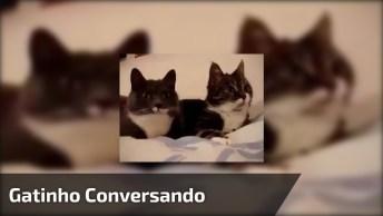 Gatos Conversando, Que Sons Mais Fofinhos Que Eles Fazem!