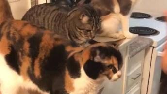 Gatos Cumprimentando A Humana, O Último Não Quis Saber Dessa Palhaçada Hahaha!