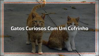 Gatos Curiosos Com Um Cofrinho Super Diferente, Até Você Vai Gostar!