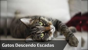 Gatos Descendo Escadas De Uma Maneira Bem Informal, Confira!