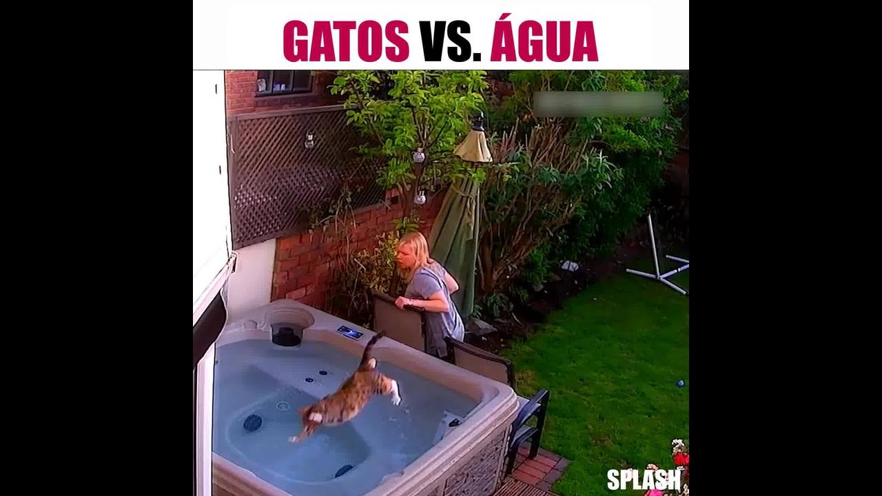 Gatos e água, uma combinação que não dá muito certo hahaha