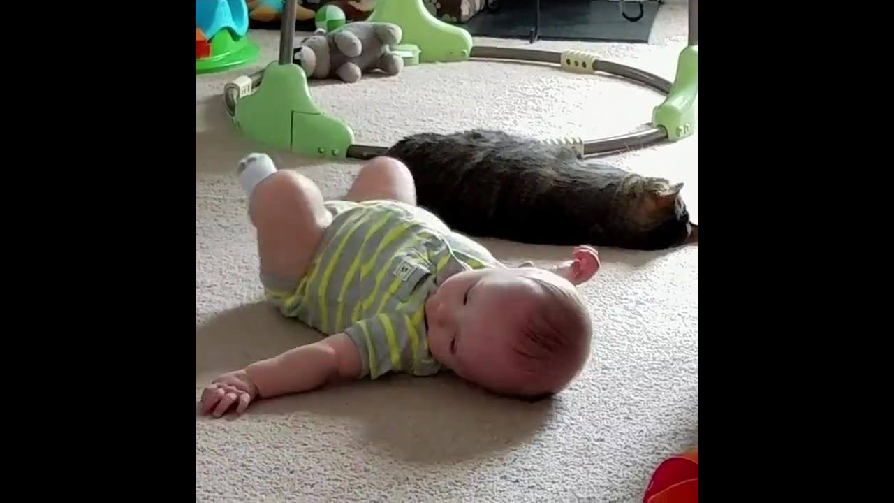 Gatos e bebês uma combinação muito fofa