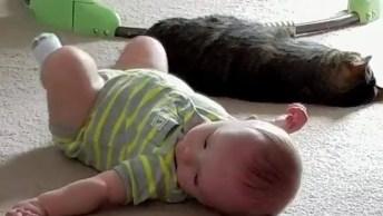 Gatos E Bebês Uma Combinação Muito Fofa, Vale A Pena Conferir!