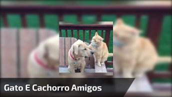 Gatos E Cachorros Em Suas Brigas Infinitas, Confira E Compartilhe!